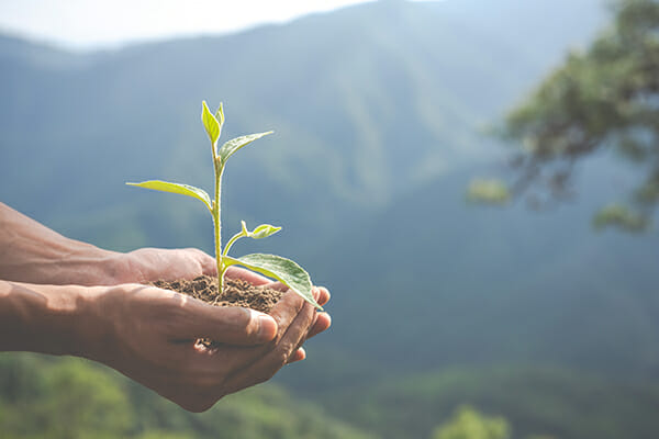 ecológica sostenible